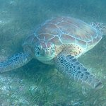 Best photo my son got from the five (or more) turtles we saw on Akumal Bay.