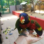 Photo de Langkawi Wildlife Park