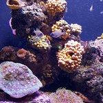Photo of Palma Aquarium