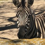 Foto di Mesker Park Zoo & Botanic Garden