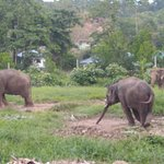 Photo of Ban Chang Thai - Elephant Camp