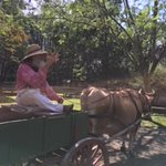 The oxcart driver tells about life on the farm and answers questions. .