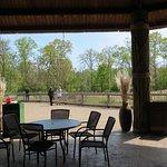 Dining near the African savanna