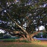 Beautiful giant tree