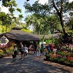 Billede af National Orchid Garden
