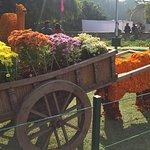Foto de Terraced Garden