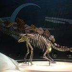 Dinosaur skeleton at the entrance