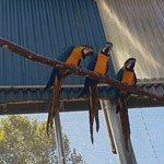 Photo de Maleny Botanic Gardens & Bird World