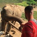 صورة فوتوغرافية لـ Bamboo Elephant Family Care