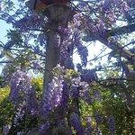 Giardini Botanici Hanbury Foto