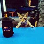 The local bar cat: Nacho