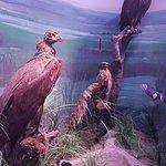 Grigore Antipa National Museum of Natural History