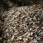 Foto de Indian Mound Trail