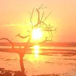 Foto de Serondela Reserve