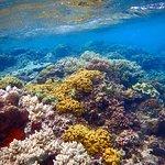 Taveuni Ocean Sports resmi