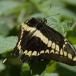 Photo of Monteverde Butterfly Garden (Jardin de Mariposas)
