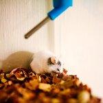 Little Critter!