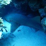 Dressel Divers Foto
