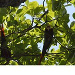 Foto de Corcovado National Park