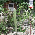 Jardín botánico y mariposario