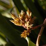 Foto de Jardin Botanico Lankester