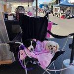 spoilt market dogs