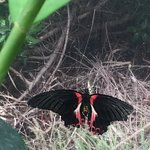 Photo of The Butterfly Farm