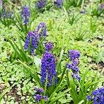صورة فوتوغرافية لـ Sherwood Gardens