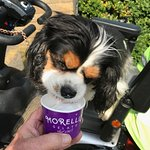 YUMMY MORELLI'S DOGGY ICE CREAM