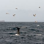 Photo of FIRMM Whale Watching