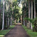 Photo de SSR Botanic Garden