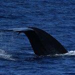 Photo of Raja & the Whales