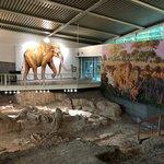 Photo de Waco Mammoth National Monument
