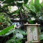 Chambers Tropical House