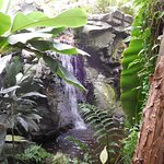 A waterfall in the tropical hothouse