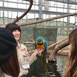 Foto de Kobe Animal Kingdom