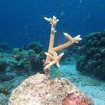 Toucan Diving resmi