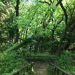 Ikuta Ryokuchi Park의 사진