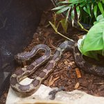 How about seeing a snake at the Conservatory, oh my.