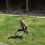 Malta Falconry Centre照片