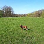Zdjęcie Weald Country Park