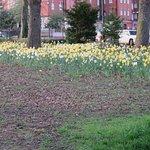 Daffodils in Leazes