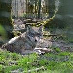 Photo of Zoo de Jurques