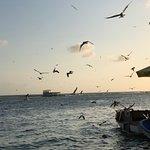 many many gulls