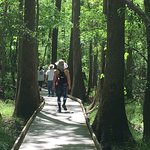 Boardwalk from Visitor's Center leads to multiple trails