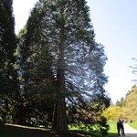 Foto de VanDusen Botanical Garden