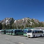 Transfer Buses