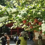 Photo of Kunozan Toshogu Shrine