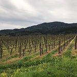Vineyards at Provenance Vineyards in Rutherford.