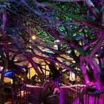 inside the tree